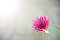 flora-1839558_1920